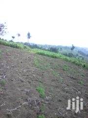1 Acre With View Mumyu, Kinungi Area | Land & Plots For Sale for sale in Nakuru, Viwandani (Naivasha)