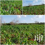 180 Acres In Isinya , 1km From Konza By Pass | Land & Plots for Rent for sale in Kajiado, Kitengela