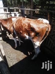Jersey Cow With A Young Female Calf.   Livestock & Poultry for sale in Meru, Ntima West