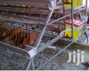 Electrogalvanised Chicken Cage | Farm Machinery & Equipment for sale in Mombasa, Bamburi