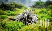 2 Nights 1 Day Amboseli National Park Visit | Travel Agents & Tours for sale in Nairobi, Nairobi Central