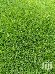 Lawn Grass In Kenya - Buffalo Grass Plugs At Asepsis Ltd Stores | Garden for sale in Nairobi, Roysambu