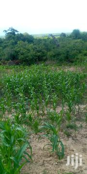 Shamba/Plot With Title Deed . | Land & Plots For Sale for sale in Kwale, Vanga