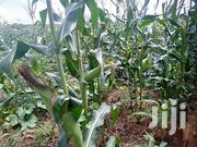 Prime 25 Acres At Sh 670K/Acre On Sale At Kwa Vonza Area Kitui County | Land & Plots For Sale for sale in Kitui, Kwavonza/Yatta