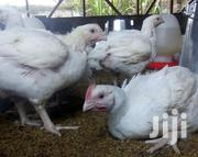 Broiler Chicken For Sale In Thika   Livestock & Poultry for sale in Kiambu, Hospital (Thika)
