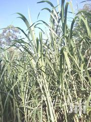 Nappier Grass For Sale | Garden for sale in Murang'a, Kigumo