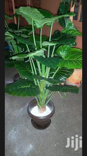 Flowers/ House Flowers/Artificial Flower | Garden for sale in Nairobi, Nairobi Central