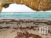 1 Acre Land on 2nd Row From Ocean for Sale in Vipingo Beach ID2098 | Land & Plots For Sale for sale in Mombasa, Bamburi