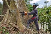 Affordable Tree Service | Professional Tree Removal/Trimming & Pruning | Landscaping & Gardening Services for sale in Nairobi, Westlands
