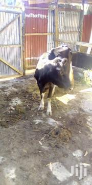 Fresian Breed Cow   Livestock & Poultry for sale in Nairobi, Nairobi Central