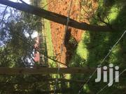 1/4 Plot Oasis Eldoret With Title Ready for Transfer | Land & Plots For Sale for sale in Uasin Gishu, Racecourse