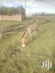 Selling Donkey   Other Animals for sale in Kajiado, Ongata Rongai