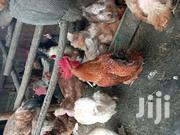 Chickens: Kroilers And Hens | Livestock & Poultry for sale in Nairobi, Kangemi