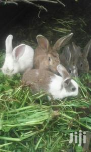 Small Rabbit And Big Rabbits | Livestock & Poultry for sale in Nyandarua, Wanjohi