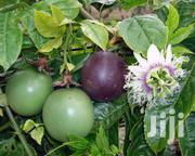 Hass Ovacado, Mangos And Passion Fruits | Feeds, Supplements & Seeds for sale in Kiambu, Juja