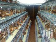 Chicken Layers Cage | Livestock & Poultry for sale in Nairobi, Kasarani