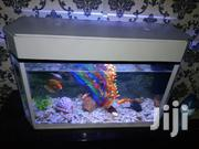 Aquarium Display | Fish for sale in Nairobi, Nairobi Central