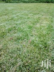 Clean Pemba Grass Lawn For Sale | Landscaping & Gardening Services for sale in Kiambu, Ngecha Tigoni