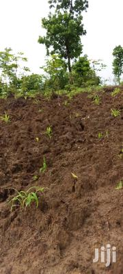 With Title A Deed | Land & Plots For Sale for sale in Mombasa, Mwakirunge