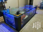 Coffee Table Aquarium | Fish for sale in Nairobi, Imara Daima