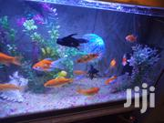 Colourful Aquarium Fish For Sale | Fish for sale in Nairobi, Kasarani