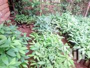 Spance Traders | Feeds, Supplements & Seeds for sale in Kiambu, Thika