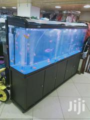 Locals Made And Imported Aquariums Deller. | Fish for sale in Nairobi, Roysambu