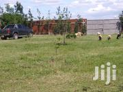 Isinya 1.5 Acres Land for Sale | Land & Plots For Sale for sale in Kajiado, Kaputiei North