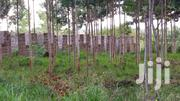 A 1/4 Acre of Land With Unfinished Plots   Land & Plots For Sale for sale in Embu, Mbeti South