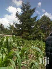 10 Acres Nyamathi, Naivasha | Land & Plots For Sale for sale in Nakuru, Naivasha East