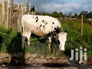 Affordable Pure Exotic Holstein Heifer Ready To Be Served | Livestock & Poultry for sale in Nyandarua, Githabai
