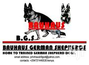 Baby Male Purebred German Shepherd   Dogs & Puppies for sale in Nairobi, Harambee