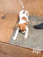 Young Male Mixed Breed Mutt | Dogs & Puppies for sale in Nairobi, Lucky Summer