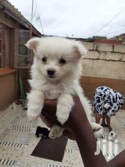 Baby Female Mixed Breed Yorkshire Terrier | Dogs & Puppies for sale in Nairobi, Utawala
