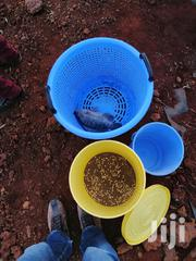 Fish Supply | Fish for sale in Nairobi, Westlands