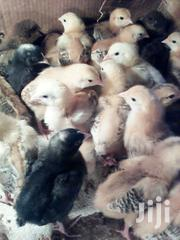 Week Old Chicks | Livestock & Poultry for sale in Kericho, Chepseon