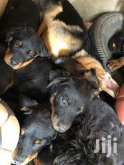 Baby Female Purebred Rottweiler | Dogs & Puppies for sale in Nairobi, Komarock